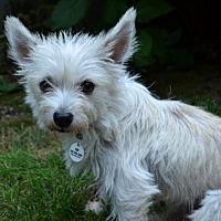 Adopt A Pet :: Buffy - Issaquah, WA
