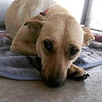 Adopt A Pet :: Maggy - Dodson, MT
