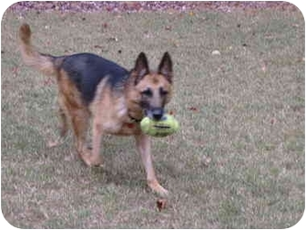 German Shepherd Dog Dog for adoption in Roswell, Georgia - JJ