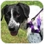 Photo 2 - Labrador Retriever/Pointer Mix Dog for adoption in Walker, Michigan - Reggie