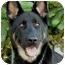 Photo 1 - German Shepherd Dog Dog for adoption in Los Angeles, California - Brandy von Beckerstein