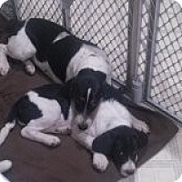 Adopt A Pet :: Tundra - Alliance, NE