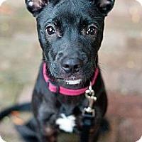 Adopt A Pet :: Kiki - Reisterstown, MD