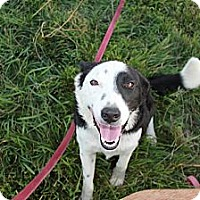 Adopt A Pet :: Dezi - Salt Lake City, UT