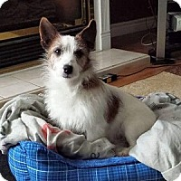 Adopt A Pet :: Benito - Hamilton, ON