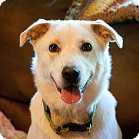 Adopt A Pet :: Alley - Knoxville, TN
