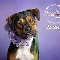 Boxer/Rottweiler Mix Dog for adoption in White Hall, Arkansas - Rebel