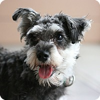 Adopt A Pet :: Molly - Canoga Park, CA