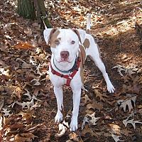 Adopt A Pet :: Cam - Gainesboro, TN