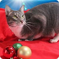 Adopt A Pet :: Maxie - McDonough, GA