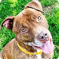 Adopt A Pet :: Nos - Meridian, ID