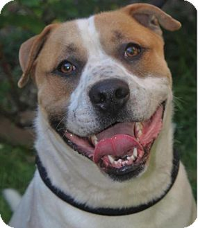 Mixed Breed (Large) Mix Dog for adoption in Red Bluff, California - HUNTER:Low fees, Altered