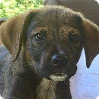 Adopt A Pet :: Orange - Hagerstown, MD