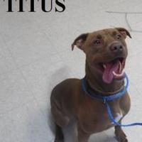 Adopt A Pet :: TITUS - Franklin, NC