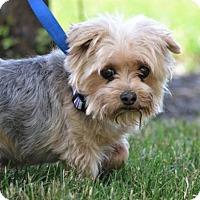 Adopt A Pet :: Dawson - Fairfield, OH