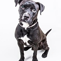 Adopt A Pet :: Matt - Decatur, GA