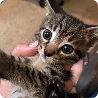 Adopt A Pet :: Twilight - Lorain, OH