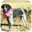 Photo 4 - English Pointer Mix Puppy for adoption in Muldrow, Oklahoma - Jo Beth