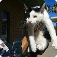 Adopt A Pet :: Dora - Chandler, AZ