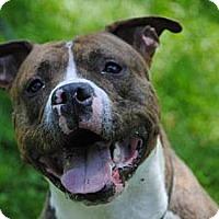 Adopt A Pet :: Beau - Vernon Hills, IL
