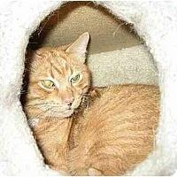 Adopt A Pet :: JAZZ Lovers I - cincinnati, OH