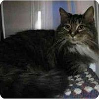 Adopt A Pet :: Nick - Greenville, SC