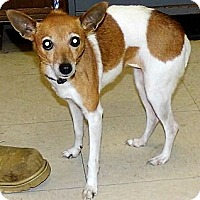 Adopt A Pet :: Grace - Washington Court House, OH