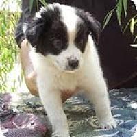 Adopt A Pet :: Adaline - Staunton, VA