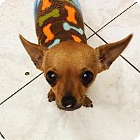 Adopt A Pet :: Lokee - Phoenix, AZ