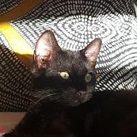 Adopt A Pet :: Blake - New York, NY