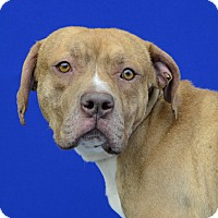 Adopt A Pet :: NOBLE - LAFAYETTE, LA