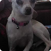 Adopt A Pet :: Sammy - Ogden, UT