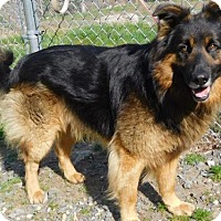 Adopt A Pet :: Hercules - Morrisville, NC