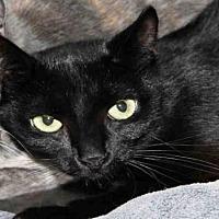 Adopt A Pet :: PARKER - Hampton Bays, NY
