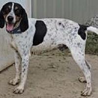 Adopt A Pet :: Guttsen - Cottonport, LA