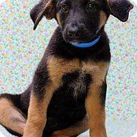 Adopt A Pet :: Oscar - Waldorf, MD