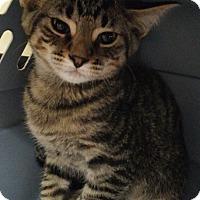 Adopt A Pet :: Gelato - Cloquet, MN