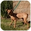 Photo 1 - Miniature Pinscher Mix Puppy for adoption in El Cajon, California - Elmer