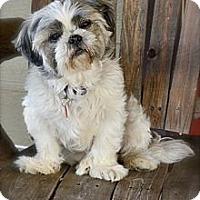Adopt A Pet :: Pudgie - Toluca Lake, CA