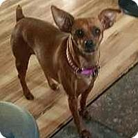 Adopt A Pet :: Lucy - Columbus, OH