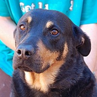 Rottweiler/Shepherd (Unknown Type) Mix Dog for adoption in Las Vegas, Nevada - Thelma