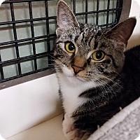 Adopt A Pet :: Nikki (CV) - Little Falls, NJ