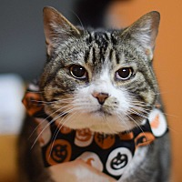 Adopt A Pet :: Ming - Carencro, LA