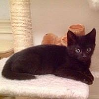 Adopt A Pet :: Pip - Buford, GA