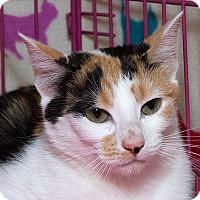 Adopt A Pet :: Chili M - Sacramento, CA