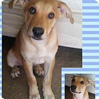 Adopt A Pet :: Odin - Tucson, AZ