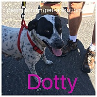 Adopt A Pet :: Dotty - Agoura Hills, CA
