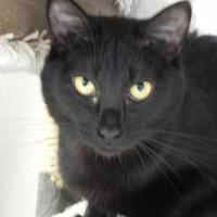 Adopt A Pet :: Inky - Buffalo, WY