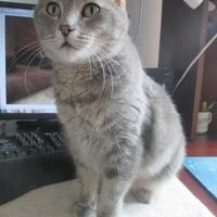 Adopt A Pet :: Lucinda - Bolingbrook, IL