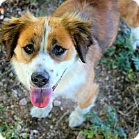 Adopt A Pet :: Rooney - Killeen, TX